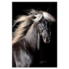 Chocolate Rocky Mtn Horse Canvas Art