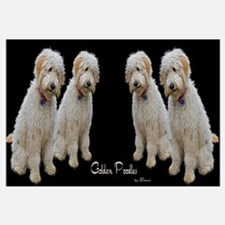 Goldendoodle: Wallace