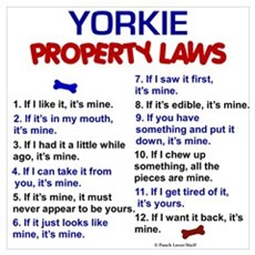 Yorkie Property Laws Canvas Art