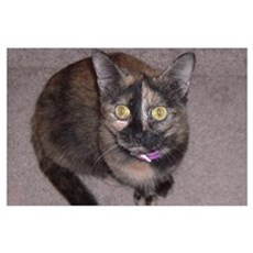 Tort Calico Poster