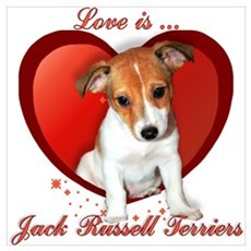Jack Russell Heart Poster