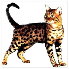 Bengal Cat: Raja Canvas Art
