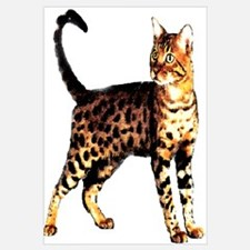 Bengal Cat: Raja