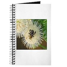Bee on Buttonbush Journal