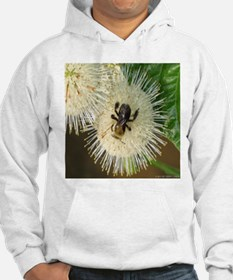Bee on Buttonbush Hoodie