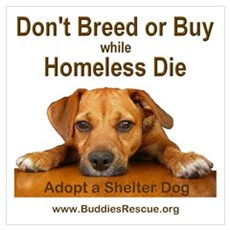 Adopt a Shelter Dog Canvas Art