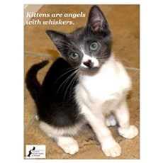 Kittens are angels with whisk Poster