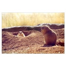 Meeting Prairie Dogs Poster