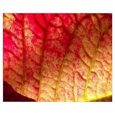 Wrinkled Leaf Poster