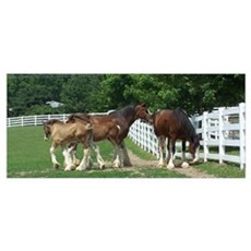 """""""clydesdales """" Poster"""
