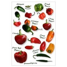 Hot Chili Peppers Canvas Art