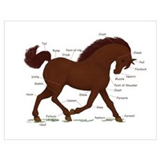 Brown Horse Anatomy Chart Poster