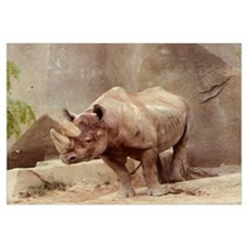 Rhinocerous Photo