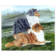 Rough Collie Pair w Blue Poster