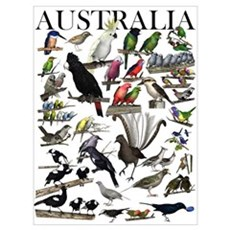 Birds of Australia Poster