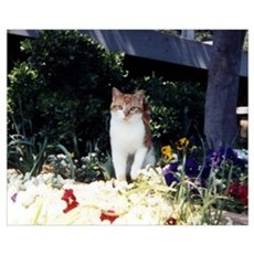 Garden Kitty Poster