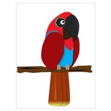 Eclectus Female Poster
