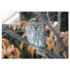 Barred Owl Wall Decal