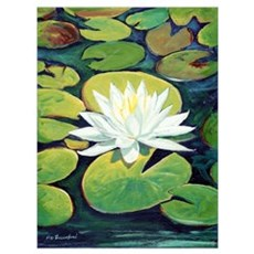 Riccoboni Water Lily Poster