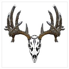 Whitetail deer skull Framed Print