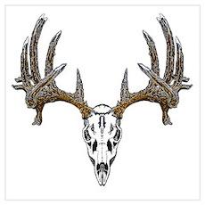 Whitetail deer skull Poster