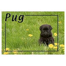 Pug-5