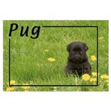 Black pug Wrapped Canvas Art