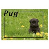 Black pug Framed Prints
