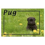 Black pug Posters