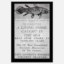 Coelacanth Announcement 11x17 Print