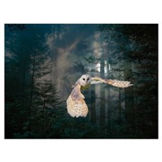 Owl at Midnight Poster