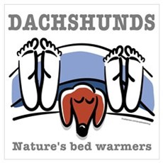 Dachshund bed warmers Poster