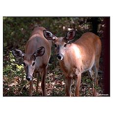 Deer 9 Poster