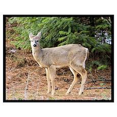 """Deer Posing Perfectly"" Poster"