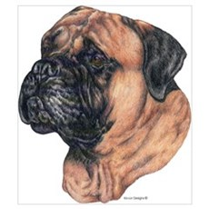 Bullmastiff Dog Portrait Poster