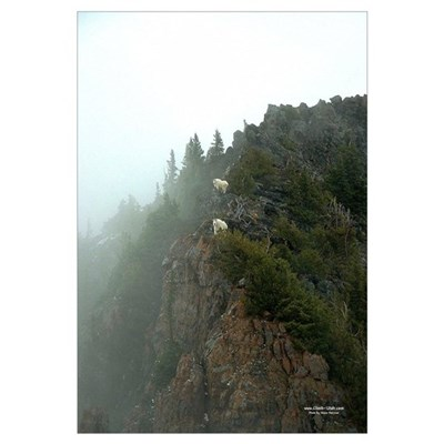 Mountain Goats 11x17 Canvas Art
