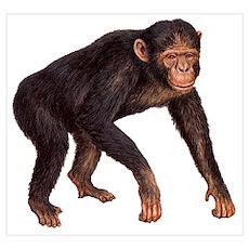 Fun Chimpanzee Monkey Poster