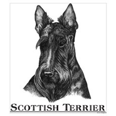Scottish Terrier Breed Poster
