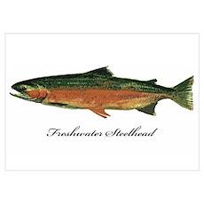 Freshwater Steelhead Trout Poster