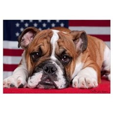 Patriotic Bulldog Canvas Art
