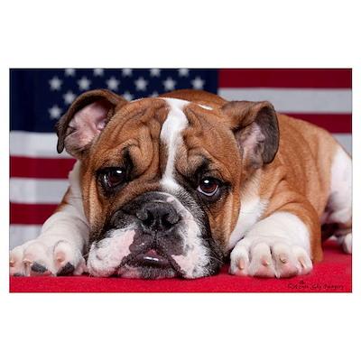 Patriotic Bulldog Poster
