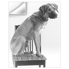JUBA LEE RIDGEBACK Wall Decal