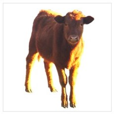 red angus Poster