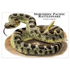 Northern Pacific Rattlesnake Canvas Art
