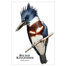 Belted Kingfisher Canvas Art
