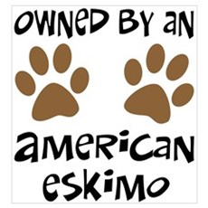 Owned By An American Eskimo Framed Print