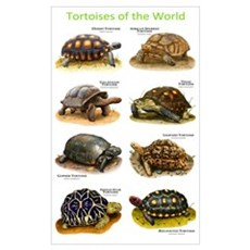 Tortoises of the World Poster