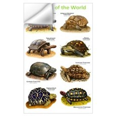 Tortoises of the World Wall Decal