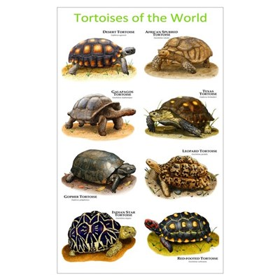Tortoises of the World Framed Print