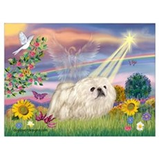 Cloud Angel & White Peke Poster